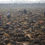 Animal_Sacrifice_Hindu